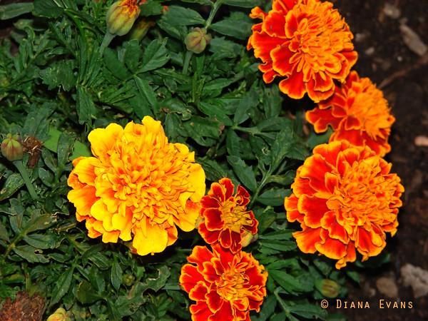 garden 2009 033 copy