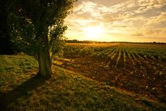 lines (Dennis_F) Tags: light sunset shadow sky orange sun field lines yellow clouds zeiss germany landscape licht mood sonnenuntergang sony wide feld felder himmel wolken gelb fullframe dslr karlsruhe landschaft sonne ultra schatten durlach ssm 1635 uwa weitwinkel linien ultrawideangle uww a850 163528 sonyalpha sonydslr vollformat zeiss1635 sal1635z cz1635 dslra850 sonya850 sonyalpha850 alpha850 sonycz1635 gettygermanyq2