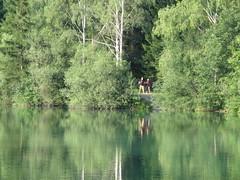 IMG_9585 (BjrnS) Tags: lake austria puch waldbadanif