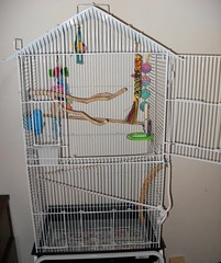 bird birdcage cage budgie parakeet kiwi