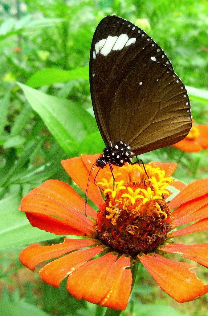 La Union Botanical Garden and Butterfly Photography