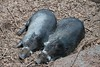 MNZoo 46 (1) (tfangel) Tags: animals zoo minnesotazoo tropicstrail