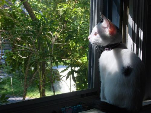 Kitten, Sun