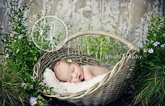 garden girl (Heidi Hope) Tags: sleeping summer portrait baby flower vintage garden studio heidi photography hope basket purple massachusetts newengland naturallight rhodeisland newborn newbornphotographer heidihope
