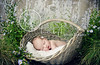 garden girl (Heidi Hope) Tags: sleeping summer portrait baby flower vintage garden studio heidi photography hope basket purple massachusetts newengland naturallight rhodeisland newborn newbornphotographer heidihope