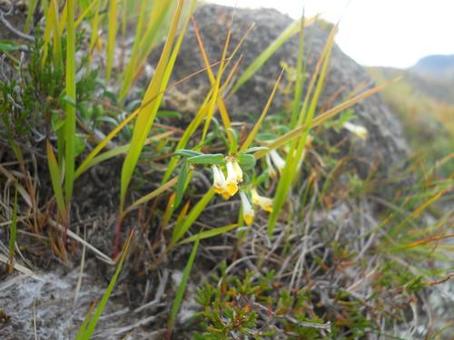 UK Wild Flowers