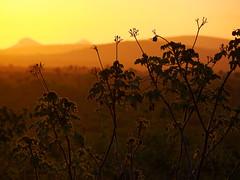 Por do Sol (Anselmo Garrido) Tags: brasil stock bahia nordeste flickrstock araci