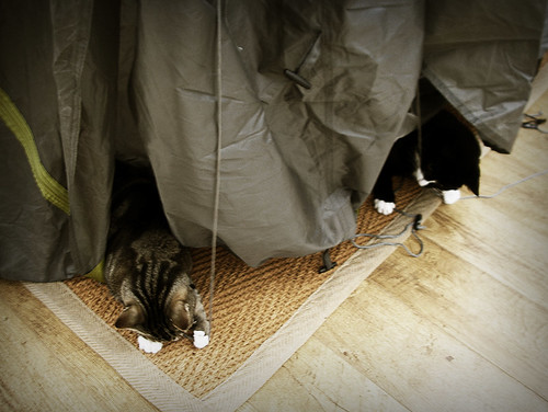 Day 110 - Naughty Tent Cats