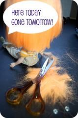 Mango haircut day!