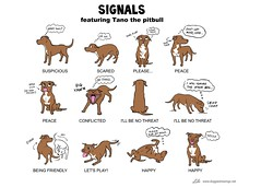 Image Result For Pitbull Dog Training