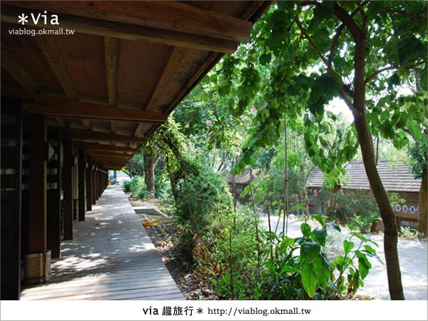 【彰化】彰化藝術高中~教室與森林結合的美麗校區19