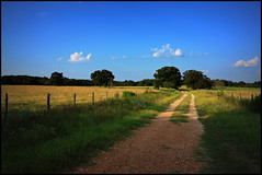 Texas Hill Country (Callie16) Tags: usa texas country feld land hillcountry