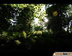 bosque a cotraluz (jorgebrnfoto) Tags: wood tree forest scotland madera stirling lowlands escocia bosque rbol arbre williamwallace wallacesmonument jorgebrn82