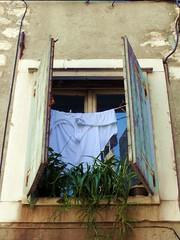 Sibenik. Croacia (Trix: Pierre qui roule .......) Tags: planta fotosencadenadas ventana finestra agosto fentre croacia volets 2010 sibenik maceta ropatendida contraventana postigo