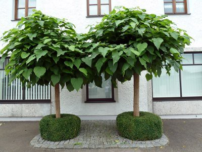 Bäume für den garten  Bäume im Rollkragenpullover - Garten selbstgemacht! - Gartenblog