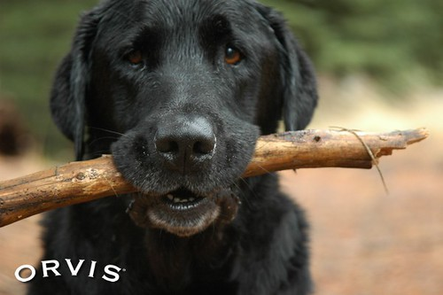 Orvis Cover Dog Contest - Coal