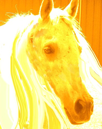 The White Horse Vision~One of the 4 Horses of the Apocalypse