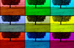 horse chestnut horizon (pho-Tony) Tags: blue trees red color colour green yellow analog 35mm fun grid lomography iso400 toycamera cyan magenta 9 ishootfilm pop iso popart lilac novelty filter lee 400 warhol analogue 135 variations cheap gels gel pop9 gimmick variation array neutraldensity filmisnotdead autaut leefilters