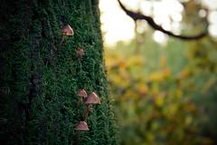 Tree Trunk (elementdavid) Tags: wood blur detail tree green mushroom closeup moss log forrest fungus trunk bole