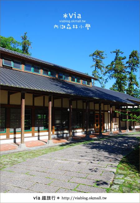 【溪頭一日遊】森林中的夢幻校園~內湖森林小學8