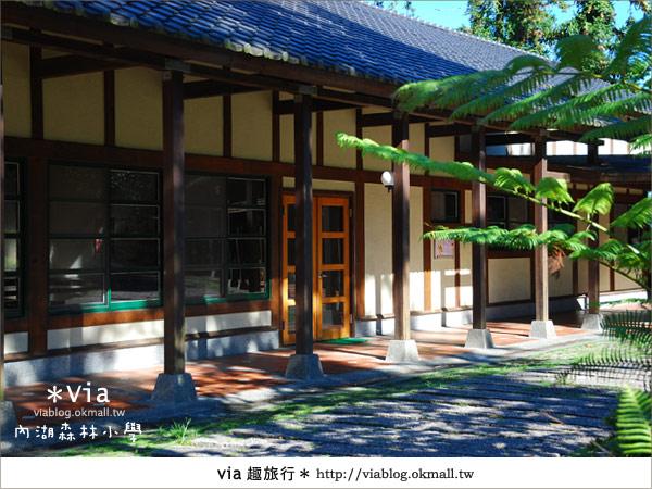 【溪頭一日遊】森林中的夢幻校園~內湖森林小學12