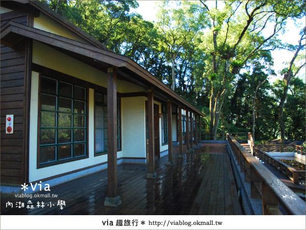 【溪頭一日遊】森林中的夢幻校園~內湖森林小學40