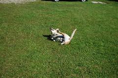 Jette&Bandit in Inzell (Sept.2010) (Günter Hentschel) Tags: dog bayern labrador yellowlab urlaub berge hund labs bandit wald ferien jette bgl brownlab inzell labbi
