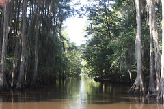 Caddo Lake Giant Salvinia Eradication Project
