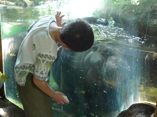 Ethan Peeking at Pygmy Hippo