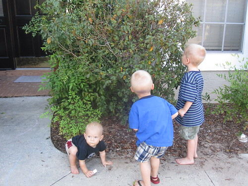 Looking for Caterpillars