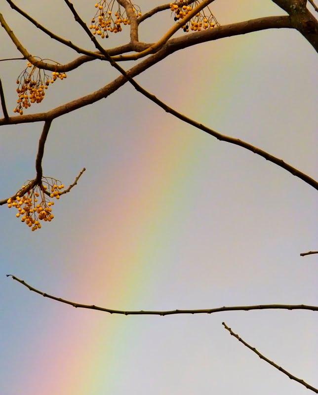 Los colores de la lluvia
