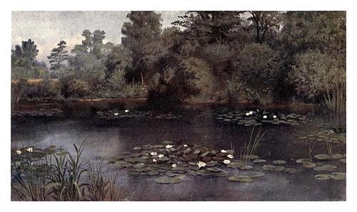 010-El estnaque de los lirios-Kew gardens 1908- Martin T. Mower