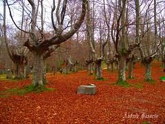 El otoo (andresbasurto) Tags: verde hojas rboles colores otoo monte naranja hayas urkiola parquenatural hayedo andresbasurto