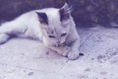 [Tì] ([L] di .zuma) Tags: occhi una titti denti piuma zampette mangiucchia