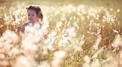 _NSY5114 (Nasey) Tags: flowers portrait people girl field grass backlight kid nikon bokeh yorkshire malaysia nikkor dslr d3 terengganu wideopen kualaterengganu grassfield 85mmf14d hawwa nasey kupih nasirali
