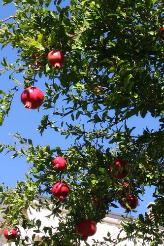 pommegrante