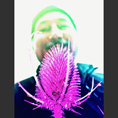 anigif blaue Karde, only showing the last pic of 10 ! (eagle1effi) Tags: cameraphone flowers flower macro art nature mobile fauna germany handy deutschland nokia flora flickr phone kunst natur cellphone blumen foliage mobilephone teasel gif fiori animatedgif blume fiore celly karde tbingen cellphonecamera damncool masterclass handykamera badenwrttemberg badenwuerttemberg dipsacusfullonum tessar aworkofart tubinga carlzeisstessar f2856 artexpression eagle1effi naturemasterclass 3wordcomments 6220c1 carlzeiss nokia6220c1 yourbestoftoday artandexpression 50megapixel ae1faves stadttbingen gpsexacthybridgeomapped beautifulcityoftubingengermany beautifulcityoftbingengermany tubingue