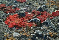 Red 3 (9brandon) Tags: nunavut tundra baffinisland