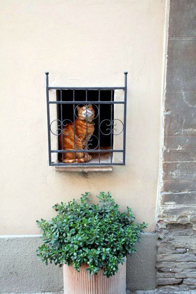 kitty cat, montepulciano