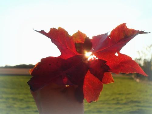 autumn 041