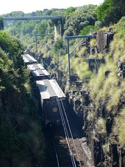 narrow cutting (sth475) Tags: railroad autumn train wagon grain railway australia nsw cutting infrastructure southcoast bog kiama freight pn bombo endoftrain sra illawarra eot manildra