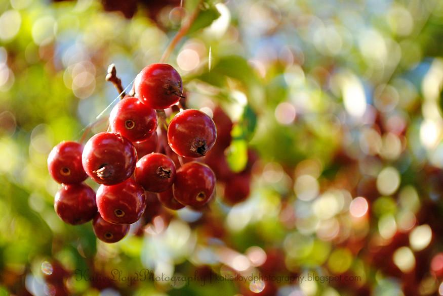 Berries-and-bokeh---wm