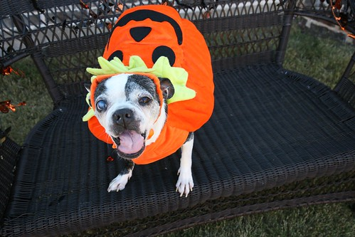 Paisley May is ready for Halloween