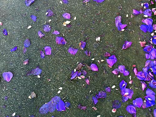 purple sf sidewalk