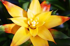 Yellow Cactus Flower