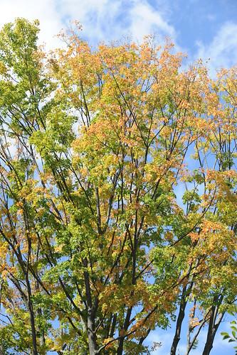 Pine Hollow Arboretum
