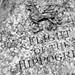 Flight of the Hippogriff - Wizarding World of Harry Potter - Universal Studios -
