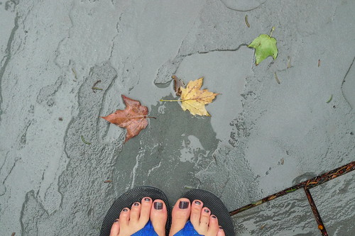 my feet and leaves