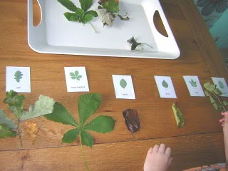 Classifying leaves. (Photo from Two Little Seeds)