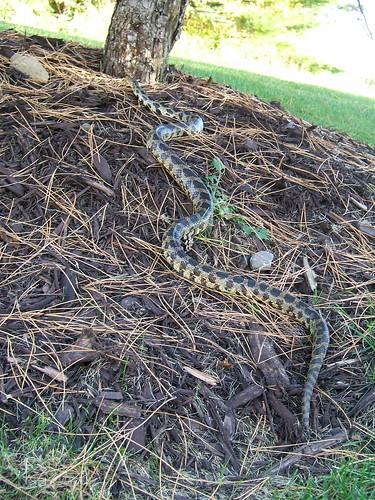 Backyard Visitor - 3